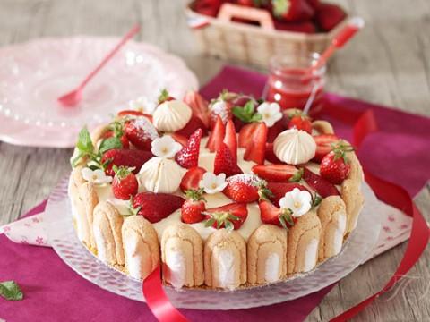 Charlotte fraises façon tiramisu1